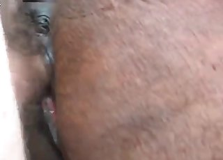 Horse's asshole ripped by a stud