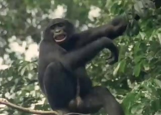 Sweet monkeys have beautiful sex action on the camera