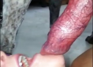 Gorgeous hottie likes sucking her doggy's red dick