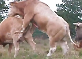 Insane bull is utterly banging a cow form behind