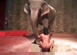 Elephant sees a hot honey delectation herself