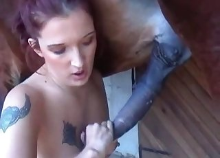 Pecker sucking action with a horse
